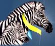 zebra-trans.png