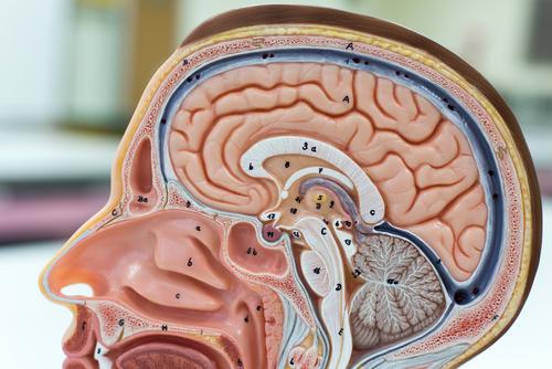pituitary.jpg